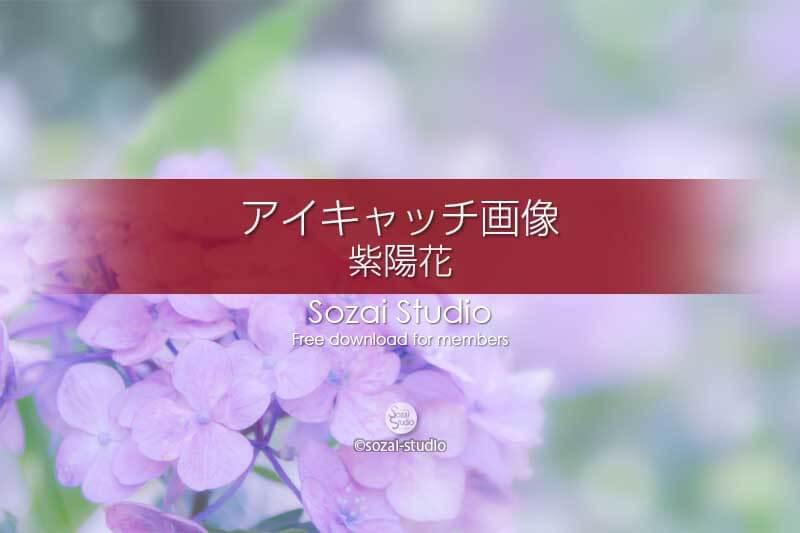紫陽花〜淡い紫のアジサイ:ブログ記事無料アイキャッチ画像