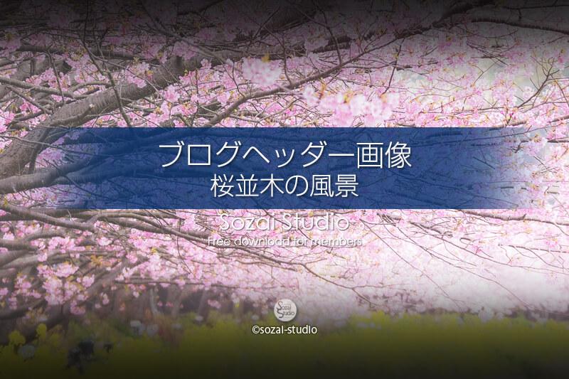 ブログヘッダー用無料画像:桜並木の風景 河津桜と菜の花 4素材