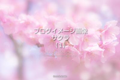 ブログ記事用無料イメージ画像:春のシリーズ桜の花(1)