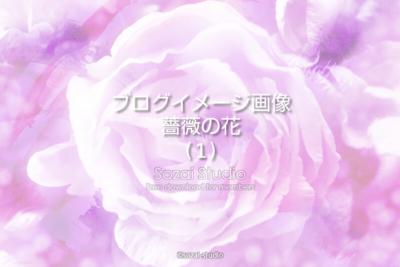 ブログ記事用無料イメージ画像:花シリーズ薔薇の花(1)