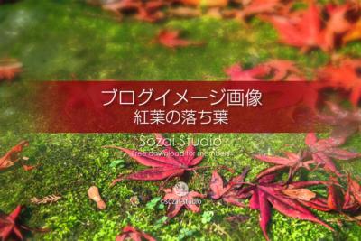 ブログ記事用無料イメージ画像:紅葉の落ち葉 苔の上のモミジ4素材