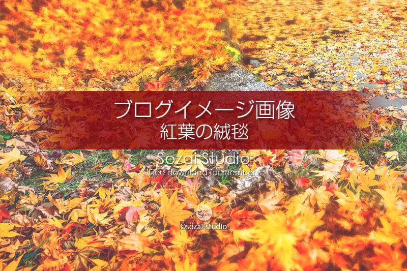 ブログ記事用無料イメージ画像:秋の風景紅葉の絨毯 4素材