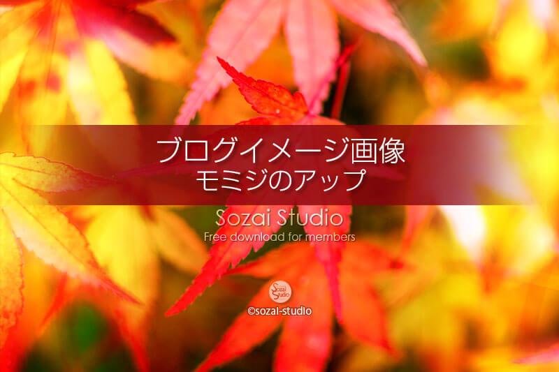 ブログ記事用無料イメージ画像:モミジの葉 紅葉アップ 4素材|写真を楽しむブログ