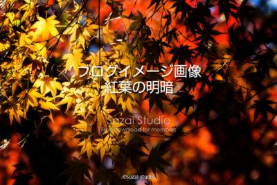 ブログ記事用無料イメージ画像:紅葉のある風景 明と暗4素材