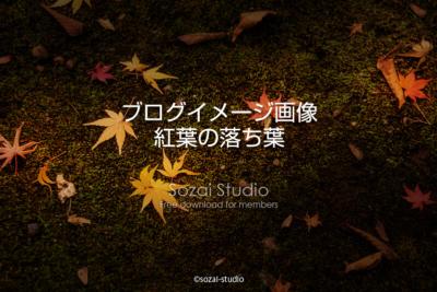 ブログ記事用無料イメージ画像:紅葉の落ち葉 侘び寂び4素材
