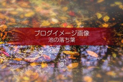 ブログ記事無料アイキャッチ画像:紅葉 池の中の落ち葉4素材|写真を楽しむブログ 写真ブログ素材