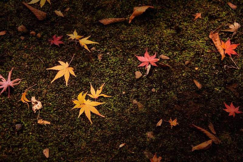 ブログ記事用無料イメージ画像:紅葉の落ち葉 侘び寂び4素材|素材スタジオ