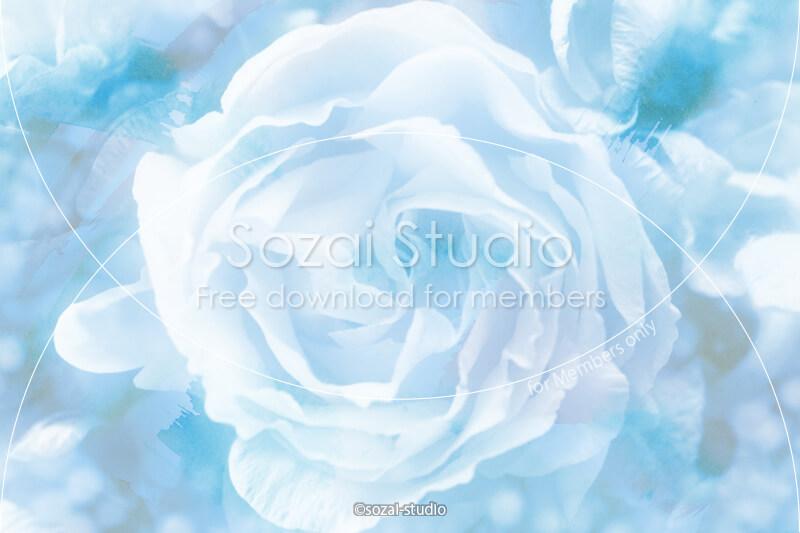 ブログ記事用無料イメージ画像:花シリーズ薔薇の花(1)|素材スタジオ
