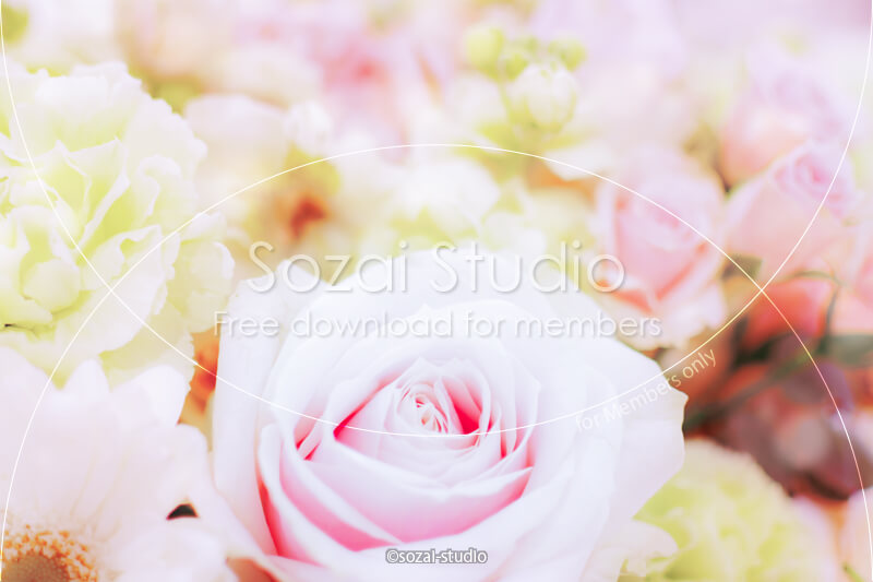 ブログ記事用無料イメージ画像:花シリーズ薔薇の花(2)|素材スタジオ
