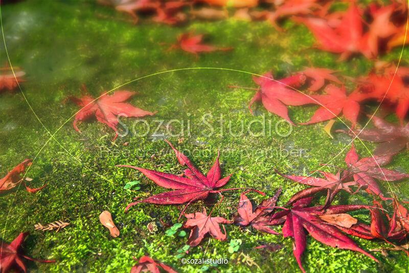 ブログ記事用無料イメージ画像:紅葉の落ち葉 苔の上のモミジ4素材|素材スタジオ