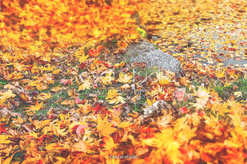 ブログ記事用無料イメージ画像:秋の風景紅葉の絨毯 4素材|素材スタジオ