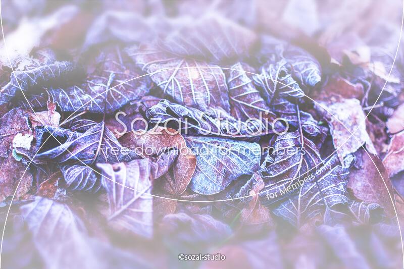 ブログ記事用無料イメージ画像:冬景色 凍てつく落ち葉 4素材|素材スタジオ