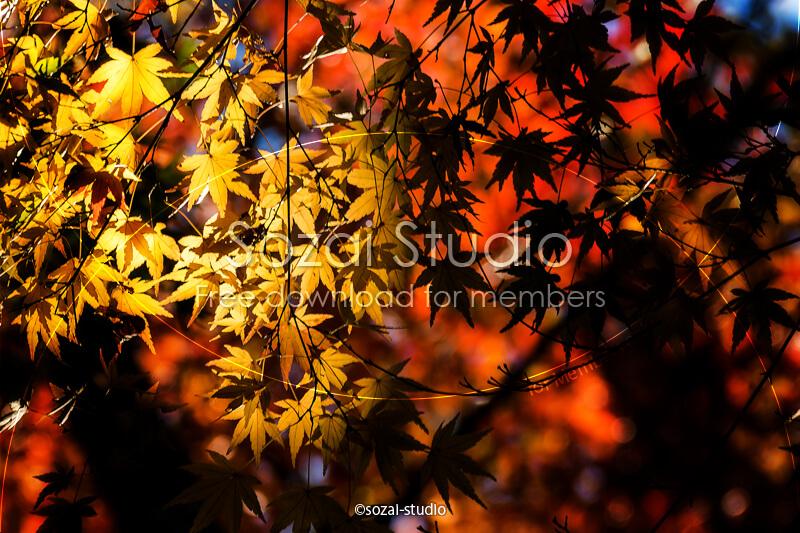 ブログ記事用無料イメージ画像:紅葉のある風景 明と暗4素材|素材スタジオ