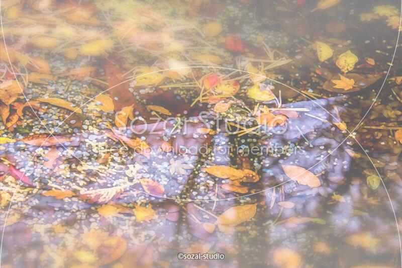 ブログ記事無料アイキャッチ画像:紅葉 池の中の落ち葉4素材