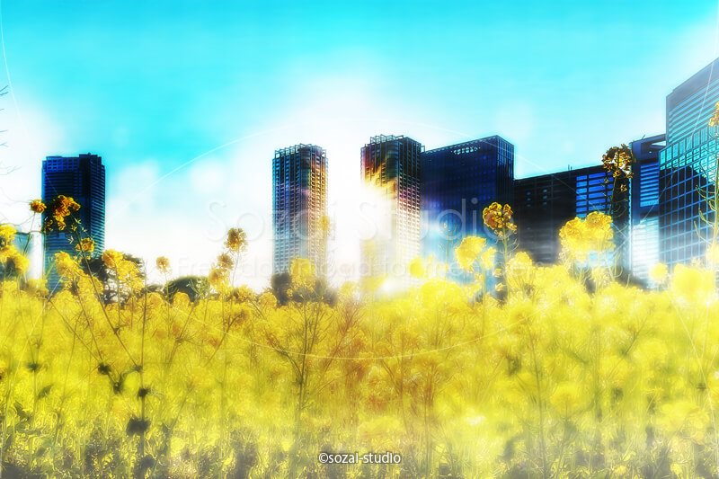 ブログ記事無料アイキャッチ画像:都心の菜の花畑 浜離宮4素材