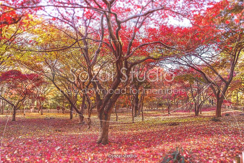 ブログ記事無料アイキャッチ画像:紅葉の風景 カエデ園4素材|素材スタジオ