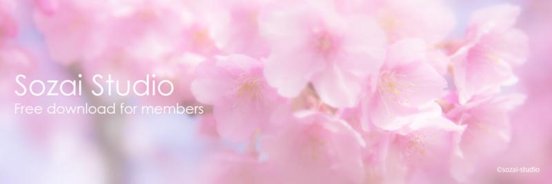 ブログヘッダー用無料画像:春のシリーズ桜の花|素材スタジオ