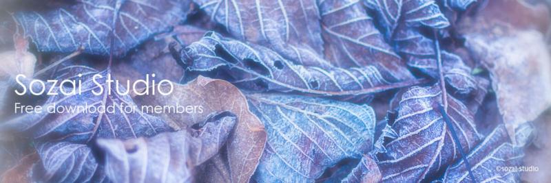 ブログヘッダー用無料画像:霜のついた落ち葉 冬のイメージ画像