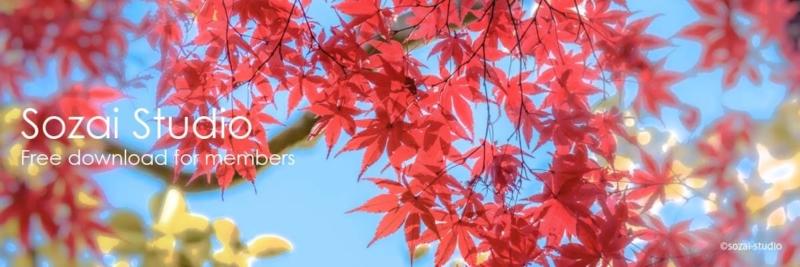ブログヘッダー用無料画像:秋の彩 もみじのイメージ画像