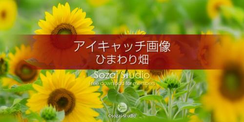 ひまわり畑:ブログ記事用画像
