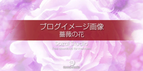 薔薇の花(1):ブログ記事用画像