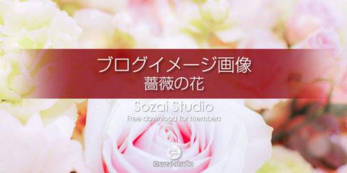 薔薇の花(2):ブログ記事用画像