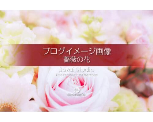 ブログ記事用無料イメージ画像:花シリーズ薔薇の花(2)4素材