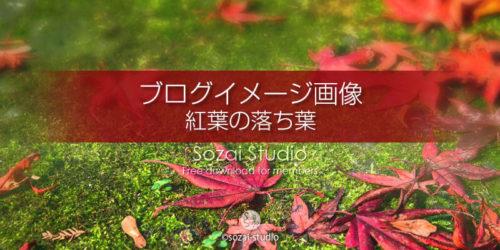 紅葉の落ち葉 苔の上のモミジ:ブログ記事用画像
