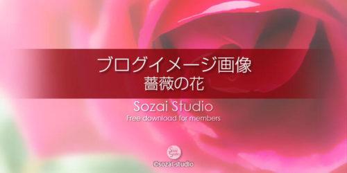 薔薇の花(3):ブログ記事用画像