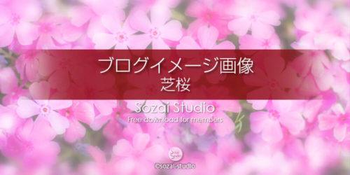 アイキャッチピンクの芝桜:ブログ記事用画像