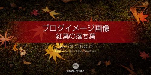 紅葉の落ち葉 侘び寂び:ブログ記事用画像