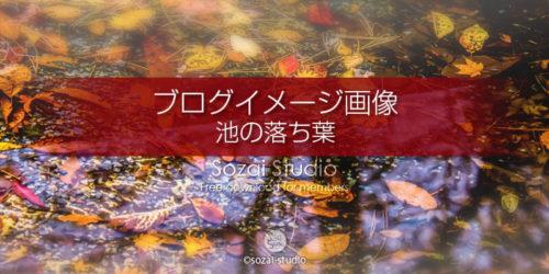 紅葉 池の中の落ち葉:ブログ記事用画像