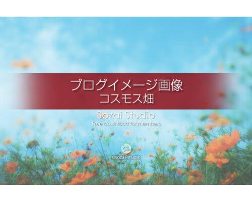 ブログ記事無料アイキャッチ画像:オレンジのコスモス畑4素材