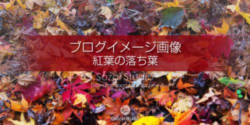 色とりどり紅葉の落ち葉:ブログ記事用画像